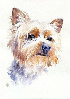 yorkie images watercolor - Yahoo Image Search Results