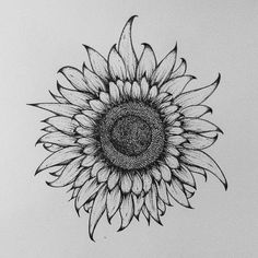 Sunflower. My favour