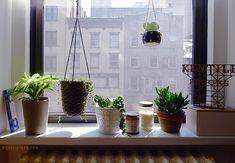 doorsixteen_apartmentplants_01