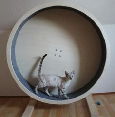 Bild 4 - Catwheel Katzenlaufrad - Biedesheim
