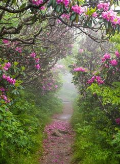 SEASONAL – Spring, Craggy Garden, North Carolina photo via kris