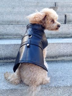 Lauren  Faux Leather Dog Jacket by Charliecloset on Etsy, $55.00