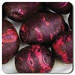 Potato 'Purple Viking': open pollinated; early (65 d); stores well. Planted 9 May (est harvest 13 Jul). Flowering 9 July, finished flowering 21 July. Leaves beginning to die 6 August.