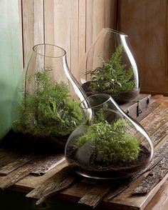 Recycled Glass Bubble Terrariums. Fill these with anything from indoor plants to succulents, or even create miniature terrarium environments.