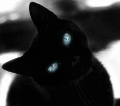 Beautiful Black Cats (=`ェ´=) look at those eyes.