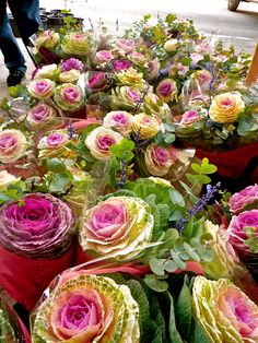 Ornamental Cabbage Bouquet   Bouquets featuring ornamental kale--these were even more gorgeous than ...
