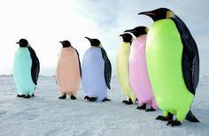 Easter penguins!