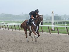 I'll Have Another Gallops at Belmont Park!