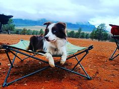 Picked a good spot with the best view 🐶🧐 #outdoorconnection  Click the link for more info!  #theoutdoorconnection #campingaustralia #exploreaustralia #weareexplorers #offroad #4x4 #campinggoals #camperlifestyle #campingadventures #stargazing #tent #campsite #campingwithdogs #tentdiaries #australian_vacations #beautifuldestinations #seeaustralia #explore #adventures #beautiful_world #travel #dogsofinstagram