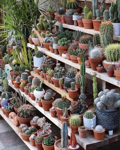From succulents to ferns, these 8 species will keep your home cheery during the long freeze. Indoor Cactus Garden, Cactus Farm, Cactus House Plants, House Plants Decor, Terrarium Plants, Succulent Gardening, Succulent Pots, Cacti And Succulents, Plant Decor