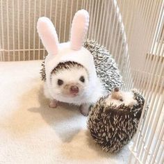 something special ♡ Cute Wild Animals, Super Cute Animals, Cute Little Animals, Animals And Pets, Hedgehog Animal, Baby Hedgehog, Woodland Creatures, Cute Creatures, Puppies And Kitties