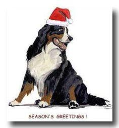 Bernese Mountain Dog christmas cards