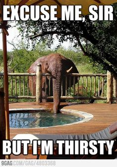 LOL!! This thirsty elephant is so funny!