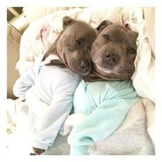 …but just thought you should know HOW FREAKIN' ADORABLE YOU ARE. | These Pit Bull Brothers Are Taking Over Instagram