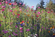 Alaskim | Surviving Wildlife, Wildflowers & Wild-Haired Children ...