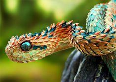 """""""La diversidad es la base de la evolución y entre los animales hay algunos especímenes que tienen características especiales que los hacen realmente raros a los ojos de los seres humanos."""" Estos animales son muy peculiares, a veces algo extravag"""
