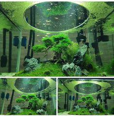 Amazing Tank Setup by Cheng Soong Keet - aquascaping Fish Tank Terrarium, Aquarium Terrarium, Aquarium Landscape, Nature Aquarium, Betta Fish Tank, Aquarium Fish Tank, Planted Aquarium, Aquascaping, Amazing Aquariums