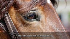 La richesse d'un cavalier se reflète dans les yeux de son cheval. Horse Breeds, Horse Riding, Pony, Cute Animals, Horses, Futurama, Seville, France, Horse Love Quotes