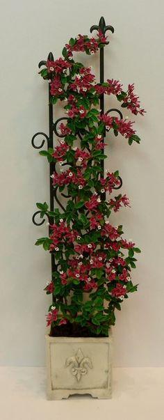 Red bougainvillea.