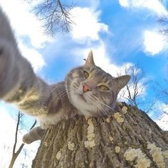 However, Manny also manages to take some amazing solo shots. | This Cat Has Totally Mastered The Art Of Taking Selfies
