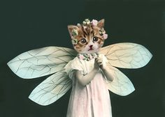 Natalia - Vintage Cat 5x7 Print - Anthropomorphic - Altered Photo - Cute Animal - Whimsical - Gift Idea - Kitten - Photo Collage - Butterfl. $15.00, via Etsy.