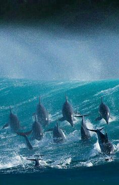 Dolphins, Port St. Johns, South Africa.