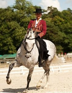 Elegido-B is a 2001 Pura Raza Espanola living, training and showing in France. This spunky grey is a capable dressage horse with several championships to his name. He has a very dignified look and classic conformation.