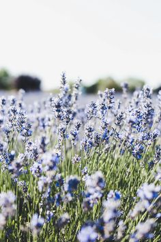 Meadow, blue, small flowers, flora wallpaper – Best of Wallpapers for Andriod and ios Frühling Wallpaper, Iphone Background Wallpaper, Flower Phone Wallpaper, Nature Wallpaper, Spring Flowers Wallpaper, Phone Backgrounds, Iphone Wallpapers, Iphone Spring Wallpaper, Plain Wallpaper