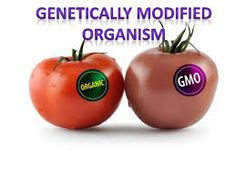 The genetically modified organisms market is segmented on the basis of application, end user and region. Genetic engineering is the science for cloning or manipulating DNAs or genes to create new characteristic in organism or produce protein or hormone.