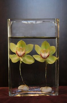 Stunningly simply green cymbidium orchids suspended in water with stones.