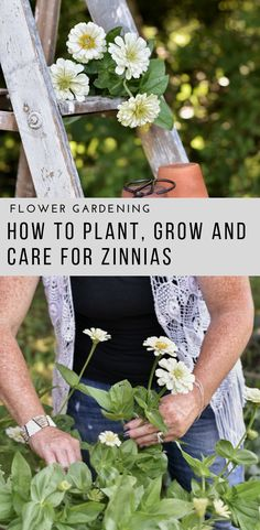 How to Plant, Grow and Care for Zinnia Flowers Are you looking for a great cut and come again flower for your cut flower gardens? Start with Zinnias. Zinnias are one of the easiest flowers to grow from seed, they grow quickly and bloom for long periods of Zinnia Garden, Cut Flower Garden, Beautiful Flowers Garden, Flower Farm, Flower Beds, Beautiful Gardens, Flower Gardening, Small Flower Gardens, Cactus Flower