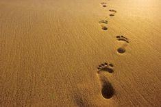 Google Image Result for http://joshuamhood.com/wp-content/uploads/2011/02/footprints-in-sand.jpg