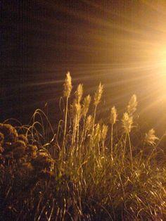 night pampas - helen birch