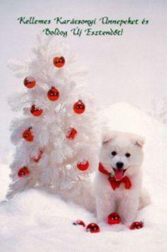 karácsonyi kutyás képek - Google Search