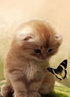 Ok so, usually i'm not really the cat type. But this was just too cute not to pin!