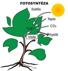 ČLOVĚK V PŘÍRODĚ :: Volny-cas-uceni-cz School Humor, Spring Crafts, Science And Nature, Funny Kids, Kids Playing, Montessori, Homeschool, Teacher, Education