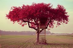 treehouse in a beautiful tree looking out into a large field.