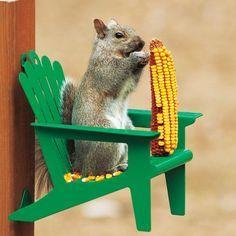 Adirondack Chair Squirrel Feeder: Enjoy hours of fun watching squirrels eat corn on the cob! Get it HERE: http://www.thegiftsformen.com/adirondack-chair-squirrel-feeder.php:
