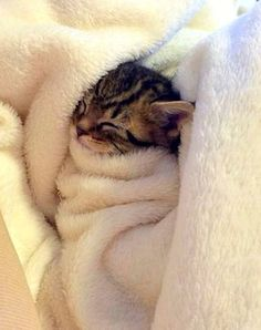 striped kitten swaddled in a towel sleeping