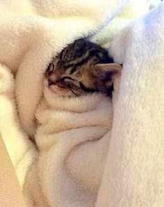 striped kitten swaddled in a towel sleeping