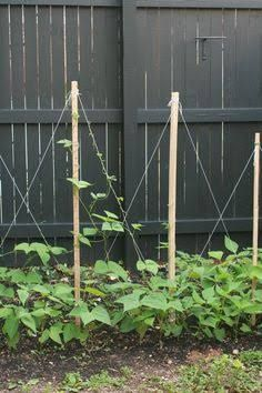 Grape Trellis Plans One Wire Trellis Mostly For Raisin