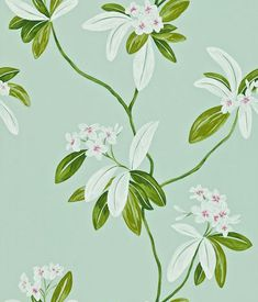 Buy Oleander, a feature wallpaper from Sanderson, featured in the Richmond Hill collection from Fashion Wallpaper. Cream Wallpaper, Wallpaper Stores, Feature Wallpaper, Wallpaper Online, Print Wallpaper, New Wallpaper, Fabric Wallpaper, Wallpaper Roll, Wallpaper Designs