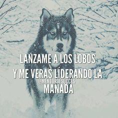 #Repost @mentorofthesucces  Lanzame a los lobos y me veras liderando la manada…