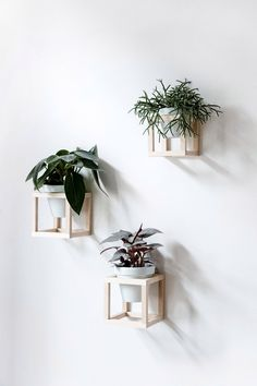 cube wall planters