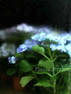 Les Fleurs-FleaingFrance