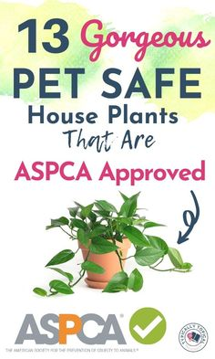Want to buy more plants for your home but also want to keep your pets safe? Here are 13 gorgeous indoor house plants that are pet friendly and non toxic to cats, dogs and horses. These indoor plants are ASPCA approved. Indoor plants that are pet safe Toxic Plants For Cats, Cat Plants, Houseplants Safe For Cats, Plants Safe For Dogs, Cat Safe House Plants, House Plants Decor, Common House Plants, Big Indoor Plants, Outdoor Plants