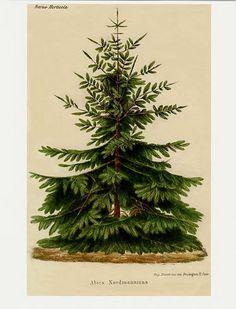free Christmas botanicals