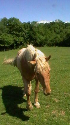 Arthrose cheval chien chevaux chiens ostéopathie équine canine haute savoie rhône alpes ostéopathe ostéo