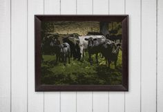 Cow Photography Cow Clan The Muddy Girl Farm by TheMuddyGirl