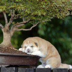 Descansando bajo el árbol.